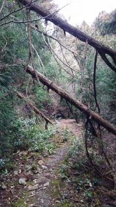 倒木に阻まれた道