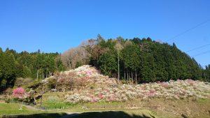 空と花のコントラスト