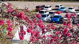3号機を囲む花