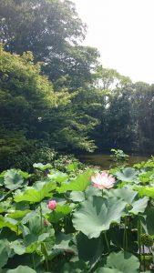 白鳥庭園~高級かき氷×3